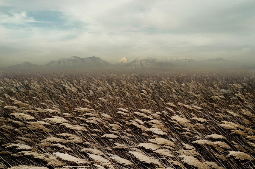Petros Koublis - Meadow, minus37