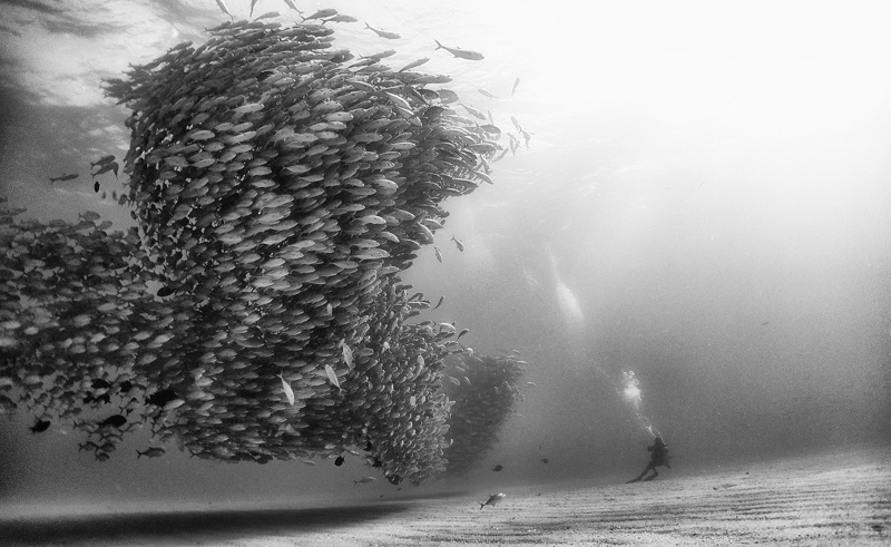 Anuar Patjane Floriuk - Underwater Realm series, minus37