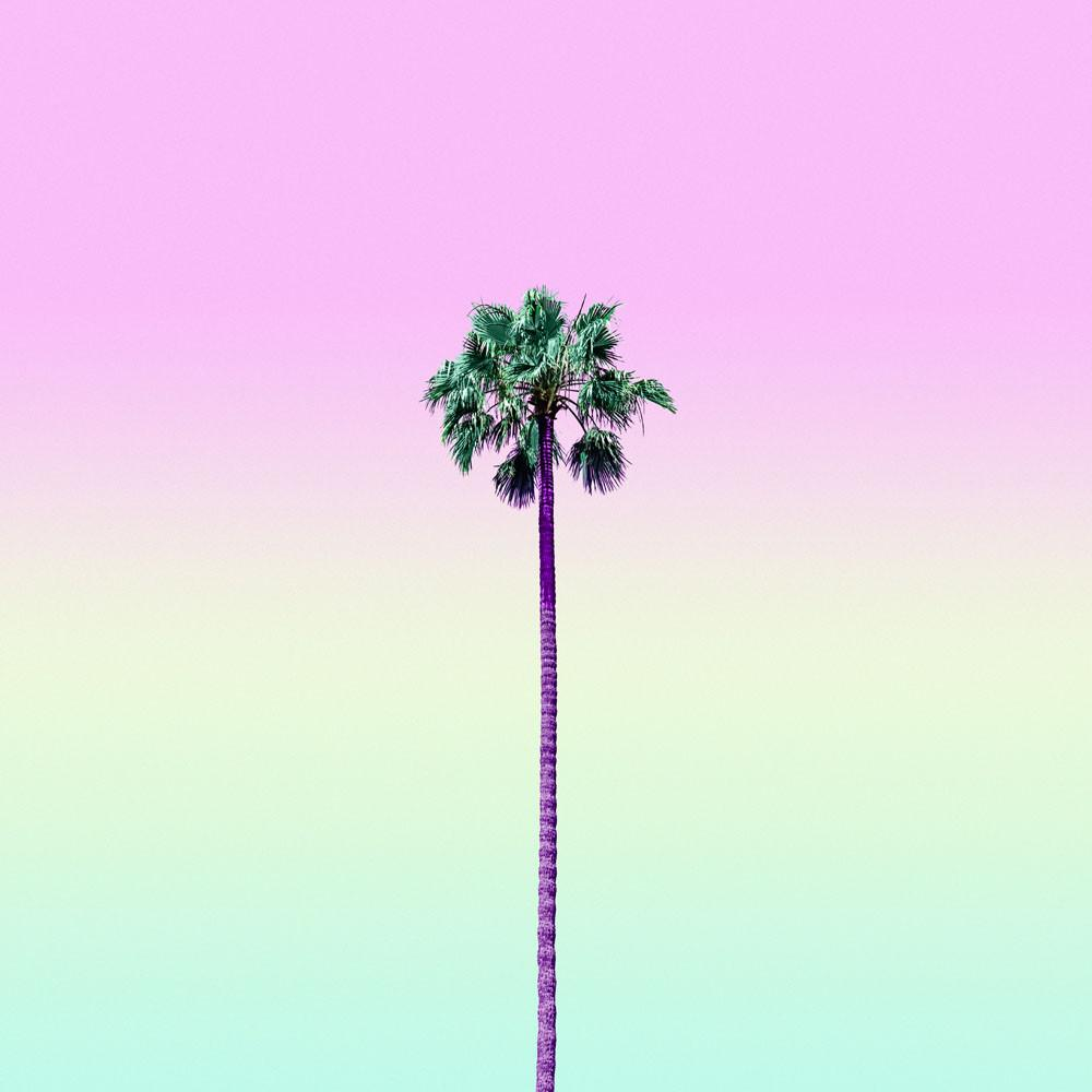 Matt Crump - Palm Sherbet, minus37