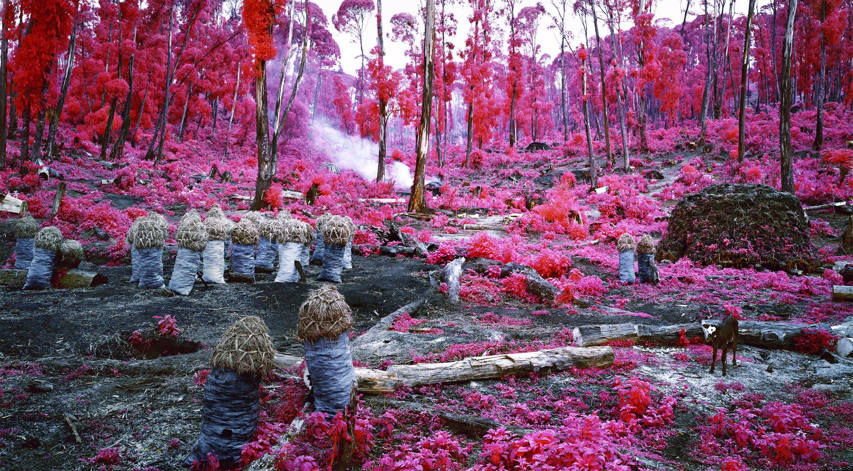 Richard Mosse - Hunches in bunches