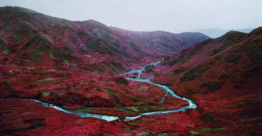 Richard Mosse - Love is the drug
