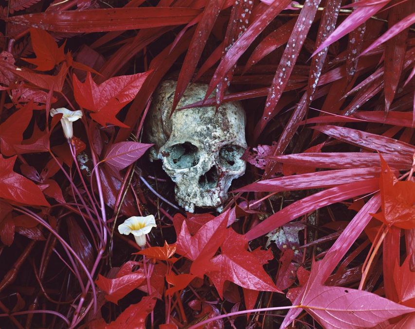 Richard Mosse - Of lillies and remains