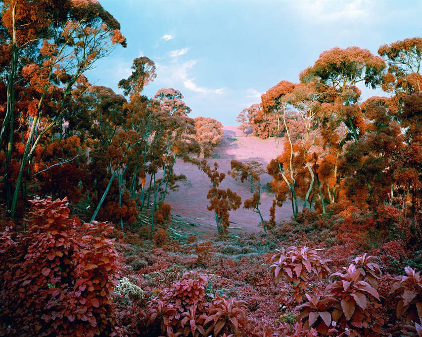 Richard Mosse - The crystal world