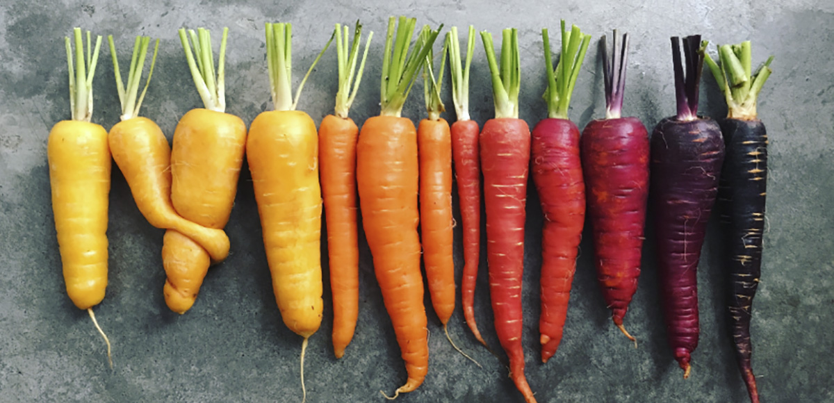 Brittany Wright - Carrot Gradient (detail), minus37