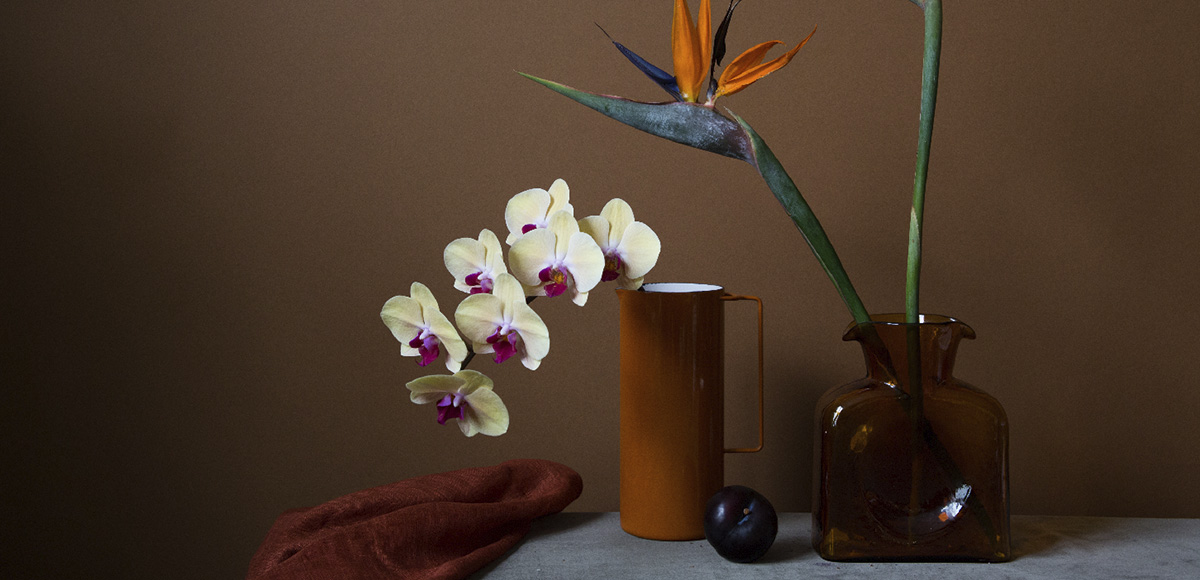 Doan Ly - bird of paradise phalaenopsis (detail), minus37